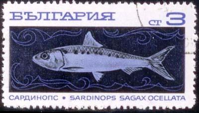 Seld54.JPG
